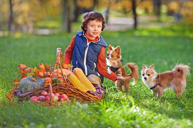 Jakie zwierzątko wybrać dla dziecka? Wybór pupila dla naszych pociech